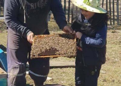 Istoria apicultuii 1