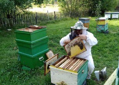 Istoria apicultuii 4