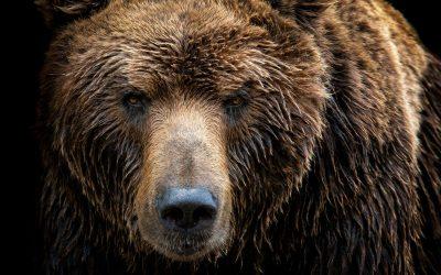 Povestea ursului BALOO