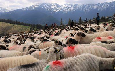 Păstorii de suflete