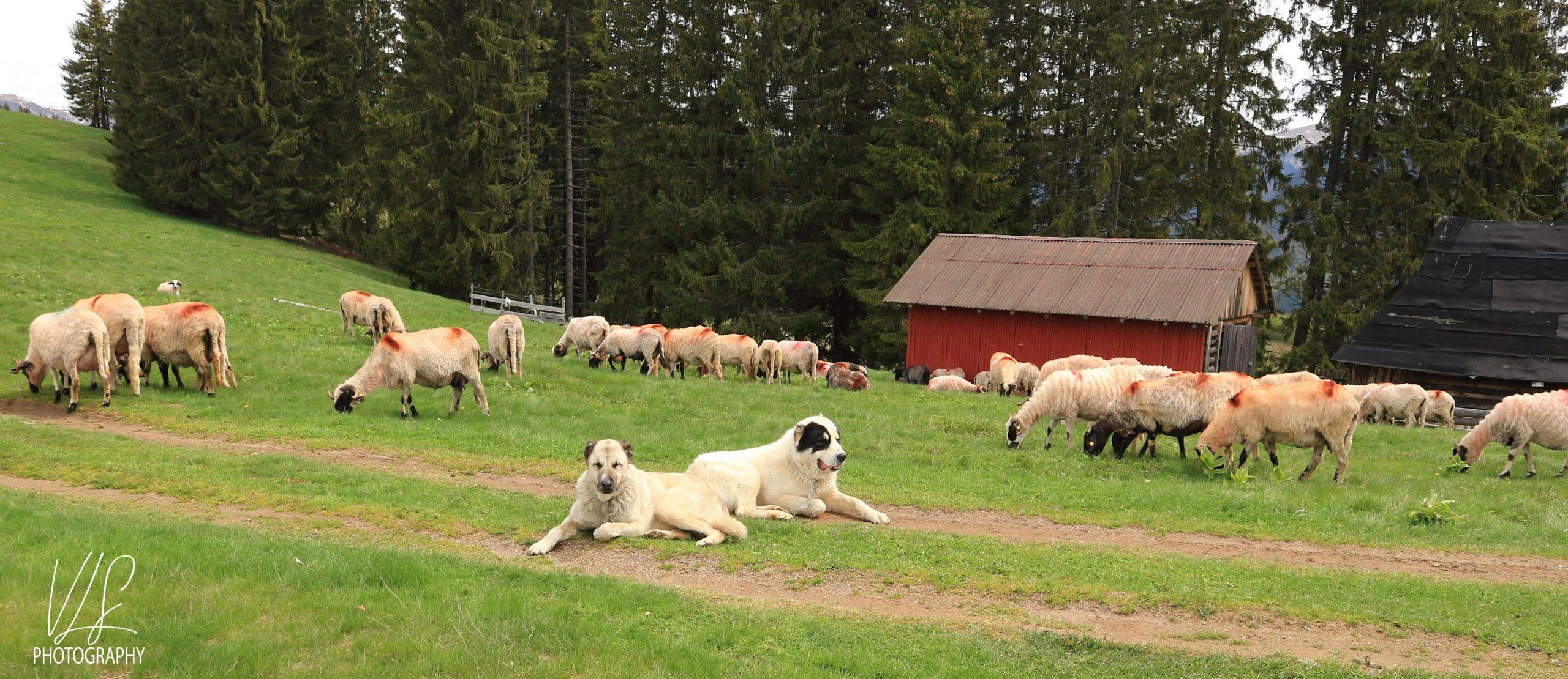 Păstorii de suflete 2